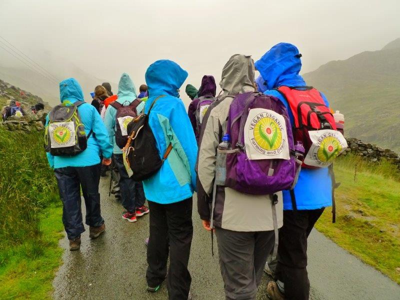 Snowdon Walk1